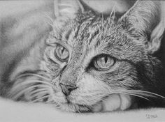 """""""Chilled"""" I really loved drawing this cat, such beautiful eyes! 💕☺ Prints of my work can be bought on my website, contact me for commissions ✏ #cat #catdrawing  #catpainting #catart #animalart #beautifulcat #drawing #pencilart #supportart #proartists #artifeature #petartist #artistsofinstagram #dailyarts #worldofpencils"""