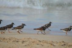 Birds on the beach Wildlife, Birds, Beach, Photos, Animals, Collection, Pictures, Animales, The Beach
