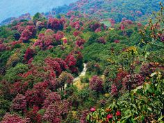 Barsey Rhododendron Sanctuary in West Sikkim. Picture credit Rishad Saam Mehta #india #bharat #sikkim #sanctuary #nature #hindustan #beauty