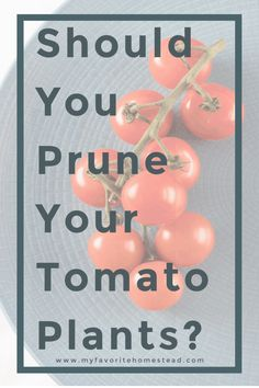 Wondering whether or not you should prune your tomato or pepper plants? This post will answer your questions and give results of my own experiment.