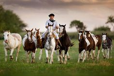 Gaucho photo for canvas American Quarter Horse, Quarter Horses, Fauna, Up Styles, South America, Latin America, Beautiful Horses, Camel, Painting