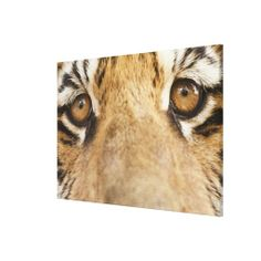 >>>Coupon Code          	Tiger Gallery Wrapped Canvas           	Tiger Gallery Wrapped Canvas online after you search a lot for where to buyDiscount Deals          	Tiger Gallery Wrapped Canvas Here a great deal...Cleck Hot Deals >>> http://www.zazzle.com/tiger_gallery_wrapped_canvas-192745629527902752?rf=238627982471231924&zbar=1&tc=terrest