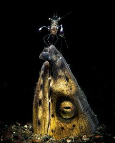 The Winning Photos Of The 2018 Underwater Photographer Contest Show How Stunning Is The Ocean - World's largest collection of cat memes and other animals Underwater Photographer, Underwater Photos, Underwater World, National Geographic Photography, National Geographic Photos, Scuba Diving Magazine, Life Aquatic, Mundo Animal, Animals Of The World