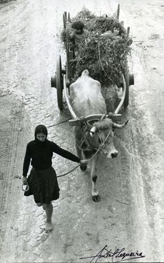 Vintage Portugal photo by Anibal Sequeira. Barefoot woman working.