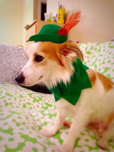 Peter Pan Hat for Dog costume by MarvinWoofski on Etsy