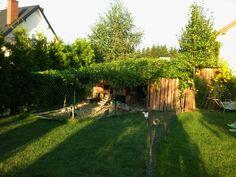 My coop in vine
