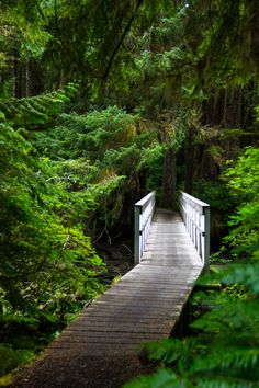 **On trail to San Josef Bay, Cape Scott Provincial Park on Vancouver Island, BC Oh The Places You'll Go, Great Places, Beautiful Places, Places To Visit, Beautiful Forest, Amazing Places, Forest Path, Vancouver Island, Canada Travel