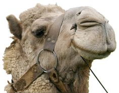 <3 this pic #camels