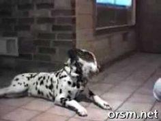hilarious talking dog video