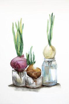 ORIGINAL watercolor onion onions in a bottle Watercolor #watercolorarts