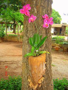 Reciclart's: Suporte para orquídeas