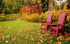 6 Fall Secrets For A Gorgeous Lawn Next Spring | OrganicLife | If your lawn tends to look more lackluster than lovely, some care this season may solve the problem.