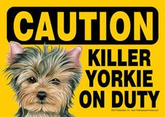"Funny Dog Sign Caution Killer Yorkie on Duty Magnet 5""x7"" Yorkshire Terrier Pup 