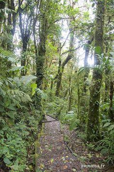 La forêt de nuages de Santa Elena à Monteverde . - annima.fr