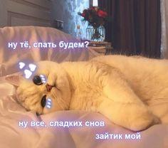 Cute Cat Memes, Cute Love Memes, Funny Memes, Russian Cat, Hello Memes, Best Memes Ever, Cute Cat Wallpaper, Cute Notes, Cute Texts