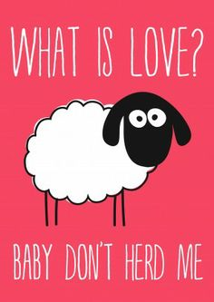 What is Love? | Funny Valentines Card- I laughed too much at this