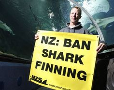 More than a third of the world's fishing countries have banned the barbaric and widely-condemned practice of shark finning, except, that is, for New Zealand.