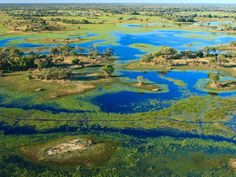 The lush Okavango Delta is like a real-world Eden, where cheetahs, zebras, buffalo, and rhinos roam freely.