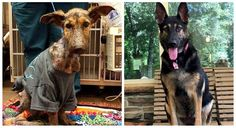 08/18/2016 Posted by When I came across a before-and-after photo of Frannie in a…