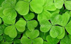 Greeny Leaf