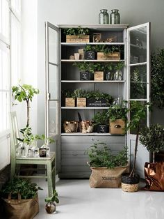 46 Attractive Herb Boxes Decor Ideas For Home Shed Interior, Herb Garden Design, Herbs Indoors, Pallets Garden, Indoor Plants, Indoor Gardening, Garden Beds, Home Projects, Planting Flowers