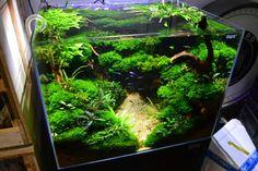 45CM aquarium idea