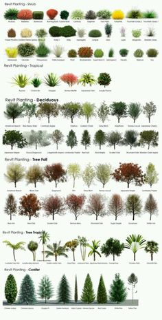 Trees shrubs