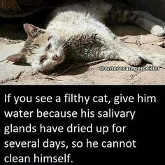 Our purrfect little kitty friends need love too. People say we arent supposed to be friends but they make pawsome frien. Cat And Cloud, Cute Cats, Funny Cats, Stop Animal Cruelty, Good Buddy, Pet Life, Animal Quotes, Animal Facts, Animal Rights