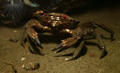 A velvet swimming crab, taken by peskynewt at Loch Long, one of the entries into the Guardian's Green shoots nature photography club. Greater protection of the UK's seas could deliver economic returns from activities ranging from commercial and recreational fishing to nature watching, according to a report by Plymouth University