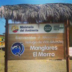 Welcome to Pto el Morro catalogado area protegida por el MAE (Ministerio de Ambiente) en la categoria de Refugio de Vida Silveste Manglares el Morro desde el 2007! 1 hora 30 mins desde Gye!! #turisteaptomorro