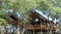 3x Bijzonder Overnachten: Afrika. Met op 1 het Krugerpark in Zuid-Afrika. Op Zoover.nl: http://zvr.nu/625KRV