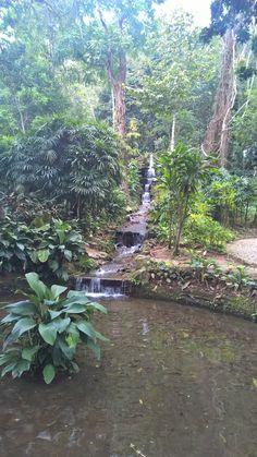 Jardim Botânico...Rio de Janeiro..