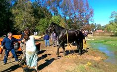 First Responders Swarm to Save Giant Draft Horse Sinking in Muddy Pond | Care2 Causes