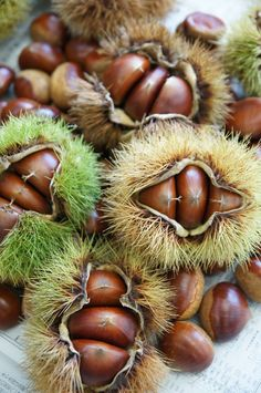Fruit And Veg, Fruits And Vegetables, Fresh Fruit, American Chestnut, In Natura, Beautiful Fruits, Tree Nuts, Flower Fairies, Fruit Art