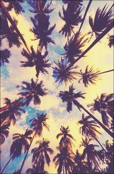 Fondo de palmeras