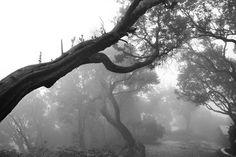 tangkuban perahu dalam kabut   Flickr - Photo Sharing!