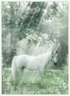 unicorn cosmosue (Susan McKiveran)(c) Woodland Myth Black Unicorn, Unicorn Horse, Unicorn Art, Unicorn Drawing, Unicorn Pictures, Horse Pictures, Cool Pictures, Mythological Creatures, Fantasy Creatures