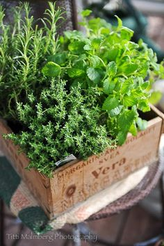Drying herbs at home - Gardening Site Herb Garden, Vegetable Garden, Container Gardening, Gardening Tips, Herb Centerpieces, Deco Nature, Aromatic Herbs, Edible Garden, Drying Herbs