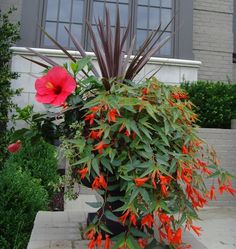 Interview with author and container gardening expert, Barbara Wise.