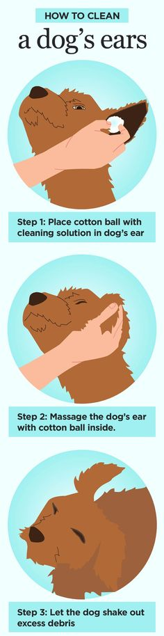 Clean your dogs ears the right way.