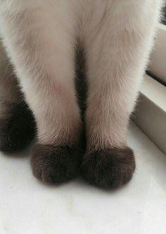 Ombré feets
