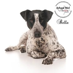 Name: Bella  Breed: Pointer x  Age: 3 years  www.hunteranimalrescue.com.au    Beautiful Bella is a sweet and gently soul. She has moved from family to family in her short 3 years and really deserves some stability and unconditional love — with Hearts Speak.