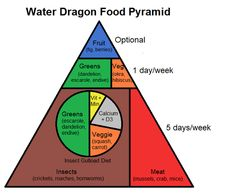 Learn about Chinese Water Dragon Nutrition with this water dragon food pyramid!
