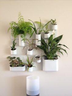 Urgio.com  beautiful plant wall!!