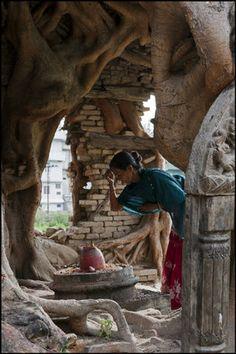 tree roots...  KATHMANDU, Nepal—Hindu temple, 2011