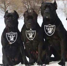 Theses are my kind of dogs