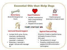 Essential Oils that help Dogs