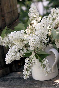 Fresh cut white lilacs