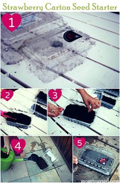 Recycle your strawberry cartons AND start seeds for your garden by making your own mini greenhouse.