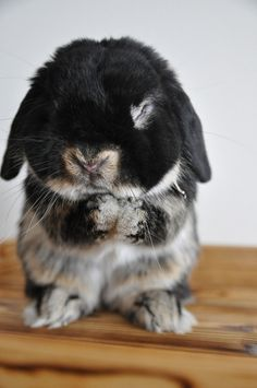 Probably the most precious bunny to ever have existed.